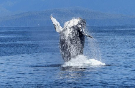 458x300xA-whale-of-a-time_916x600.jpg.pagespeed.ic.d61kNDNJ1k