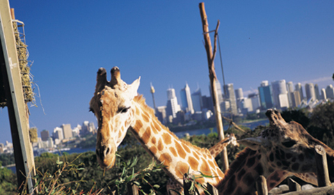 Photograph of Taronga Zoo, Sydney.