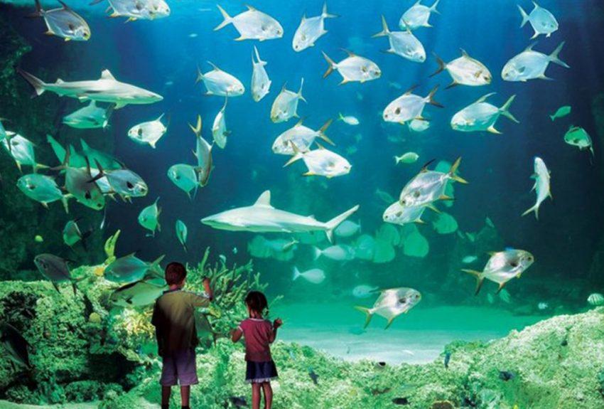 Sydney Pass - SEA LIFE Aquarium via Viator