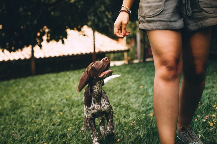 Dog Friendly Hotel | Dogs Welcome | Crowne Plaza Sydney Coogee Beach